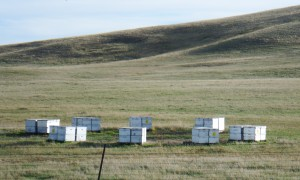 MT_OCT14_92 Hives